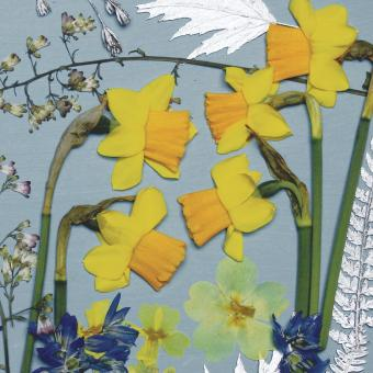 NEW ! BOTANIC GOLD  card range : NEW! FP 32  Narcissi