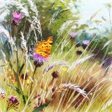 British Butterflies - New ! card range : BB 03  COMMA