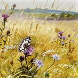 British Butterflies - New ! card range : BB 06  MARBLED WHITE