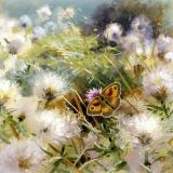 British Butterflies - New ! card range : BB 08  GATEKEEPER