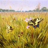 British Butterflies - New ! card range : BB 09  SWALLOWTAIL