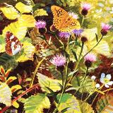 British Butterflies - New ! card range : BB22 Silver Washed Fritillary