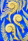 Botanic Gold  NEW !  card range : BG17 FERN FRONDS BLUE