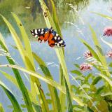 British Butterflies - New ! card range : BB19  SCARLET TIGER MOTH