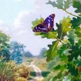 British Butterflies - New ! card range : BB18 PURPLE EMPEROR-New !
