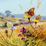 British Butterflies - New ! card range : BB13 WILDFLOWER VISITORS